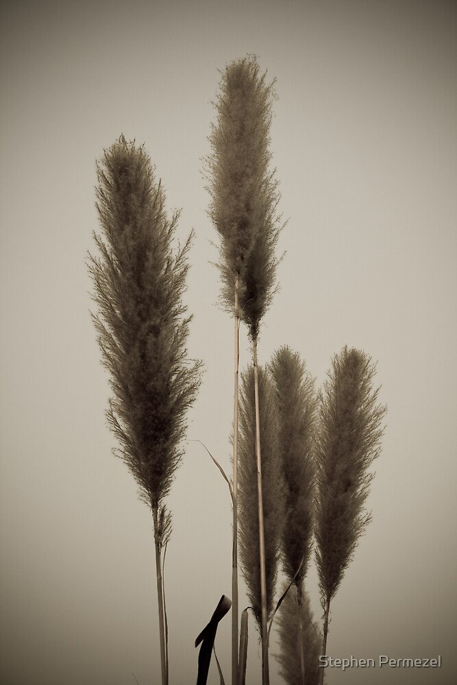 Long Grass - Golden Triangle, Thailand by Stephen Permezel