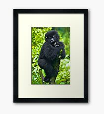 Playful Primate Framed Print