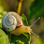 Snail by Abd El-Rahman Wael