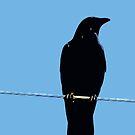 Bird on a Wire by OmandOriginal