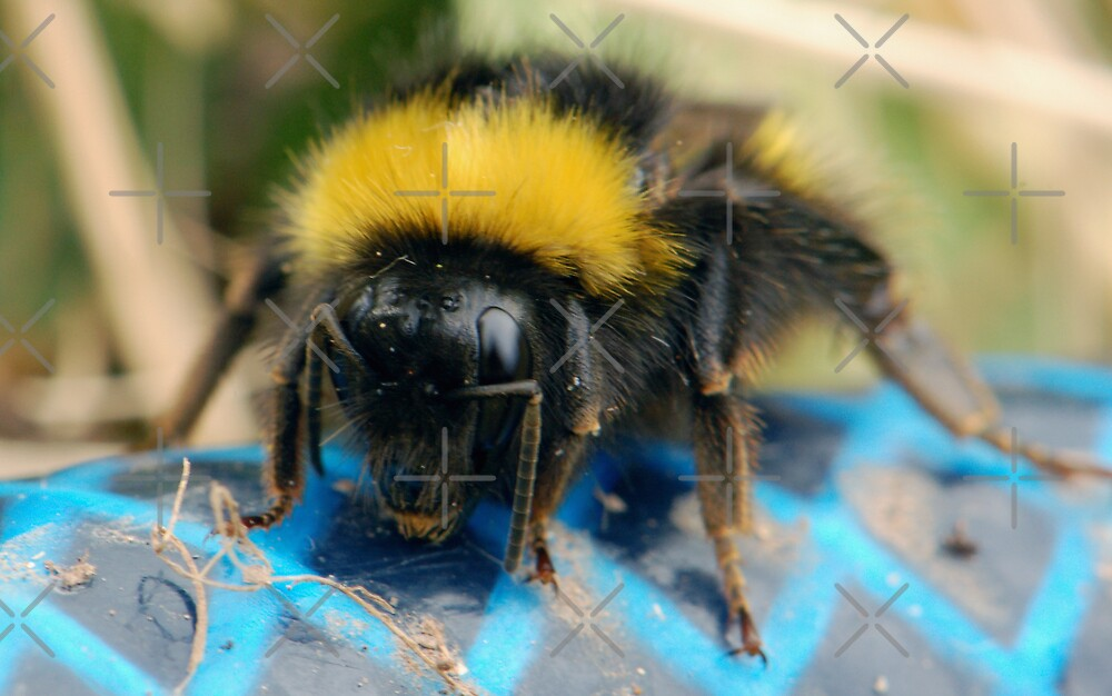 Bee on The Hose by ApeArt