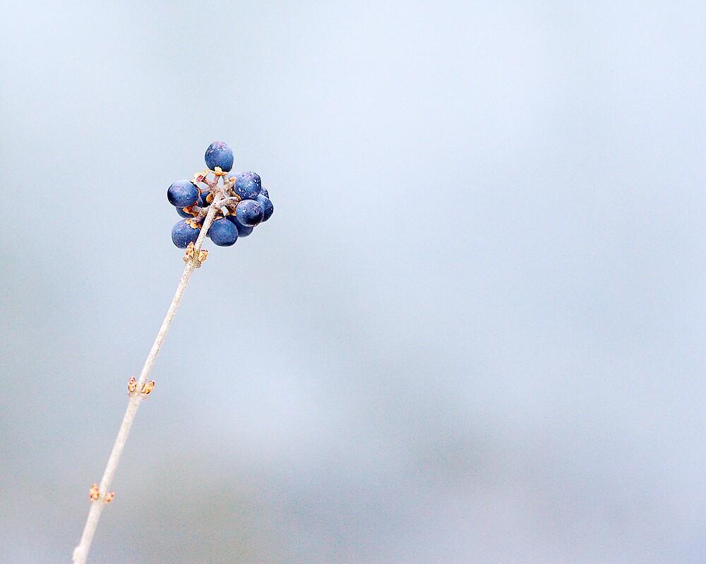Berry Blue by BellaCandids