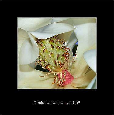 Bordered,,Center of Nature by JudithE