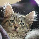 Sonja's Kitten by nosajnybor