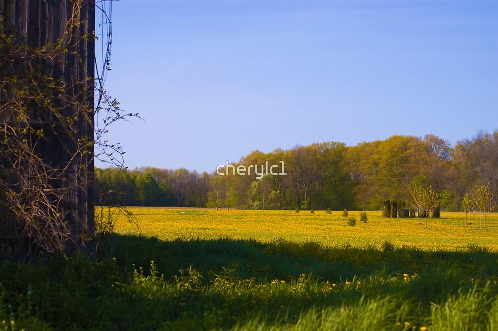 Field of gold by cherylc1