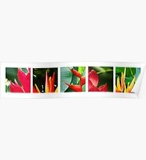 tropical collage Poster