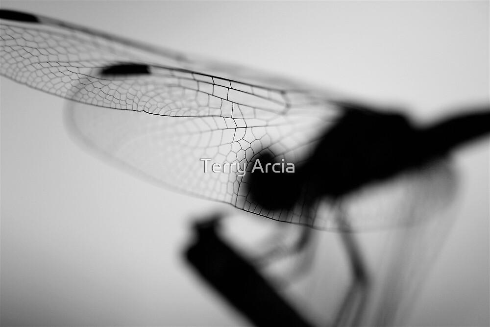 Shadows  by Terry Arcia