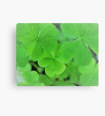 Green Clover Canvas Print