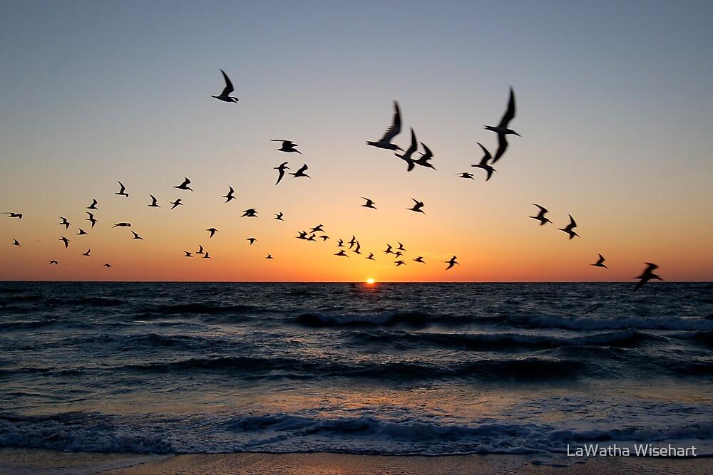 Pájaros que vuelan cerca en la puesta del sol por oldNikonFM2 (foto) | Clima subterráneo