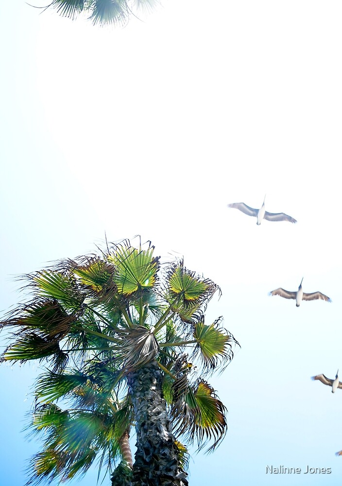 Dream-like Palm and Pelicans Flying Overhead by Nalinne Jones
