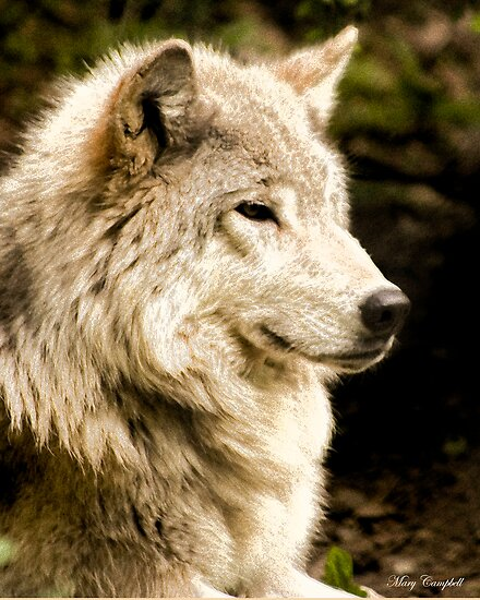 At Rest - Forest of Wolves Series by Mary Campbell