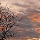Autumn dusk by Patricia01