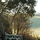 Countryside Gate and Track by Sue Robinson
