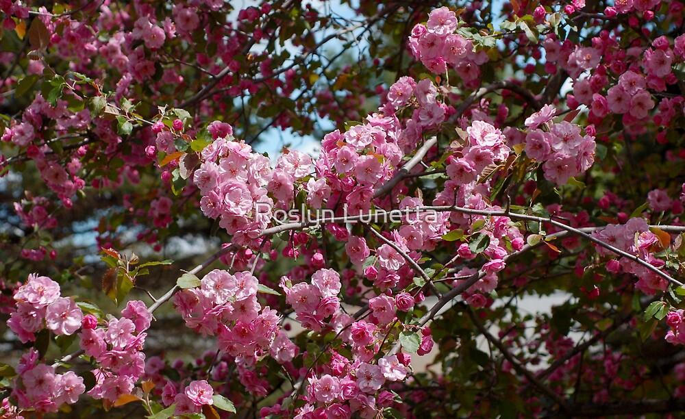 crabapple blooms by Roslyn Lunetta