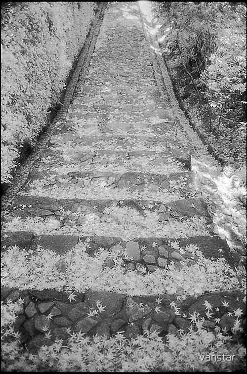 Autumn steps by vanstar