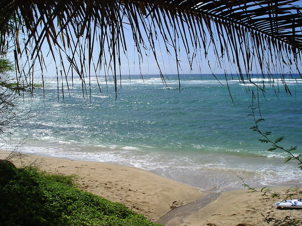 Beach in Hawaii by traveler25