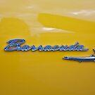 Barracuda by Linda Bianic