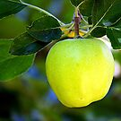 An Apple A Day Keeps The Doctor Away by © Loree McComb