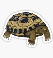 Russian Tortoise Sticker