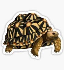 Star Tortoise Sticker