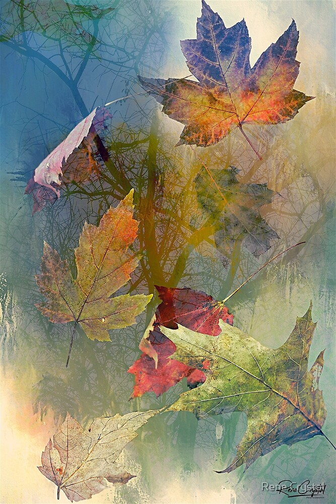 Autumn Exposure by Rene Crystal
