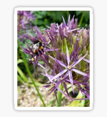 Bumble bee on Aliums Sticker