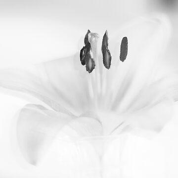 fleur3 by studiofiftyseven