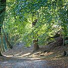 Woodland Track with Dappled Sunlight by Sue Robinson