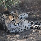 Cheetah Relaxing by Jessica Nora