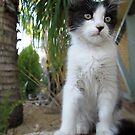 Cute Kitten On A Rock  by Toni Kane