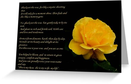 Yellow Rose With Verse - Pluck Not the Rose  by taiche