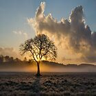 Alone Tree by Abd El-Rahman Wael