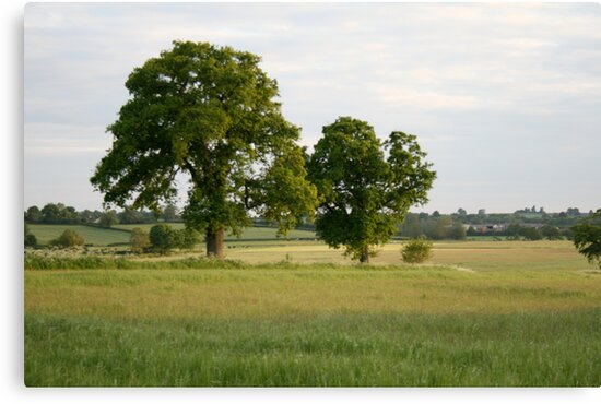 Two Trees by Iani