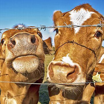 Poddy Calves by NeilAlderney
