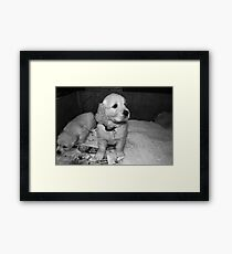 puppies... Framed Print