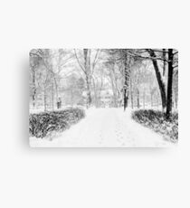 Wandering Through Winter Canvas Print