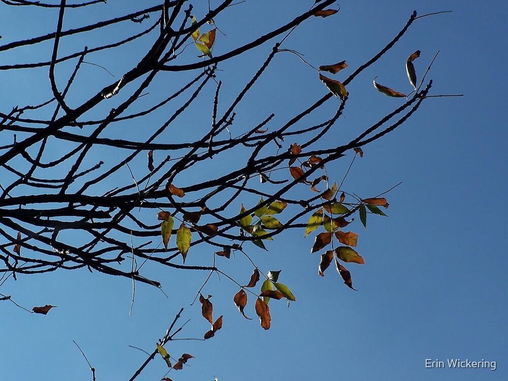 Blue Skies Smiling by Erin Wickering