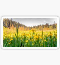 daffodils on beaver lake, stanley park  Sticker