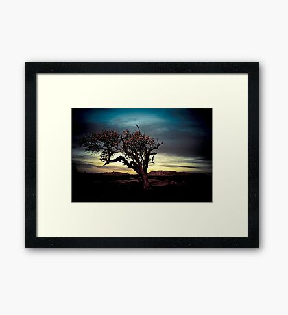 Blossom Tree @ Dog's Rocks, Geelong Framed Print