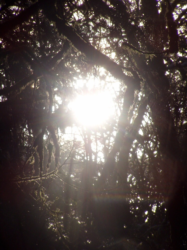 Forest Sun Rays in the Snow #49 by Dawna Morton