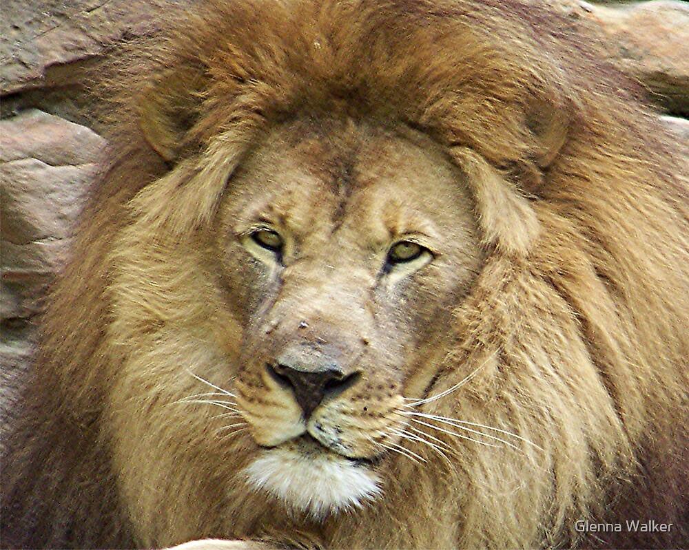 Lion King by Glenna Walker