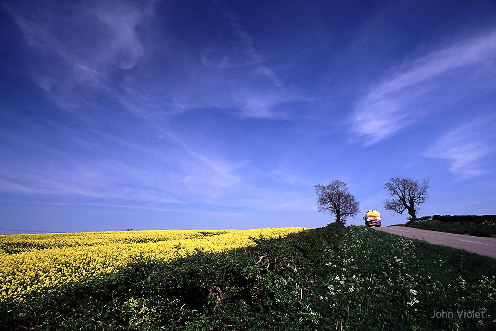 Spring Yellow by John Violet