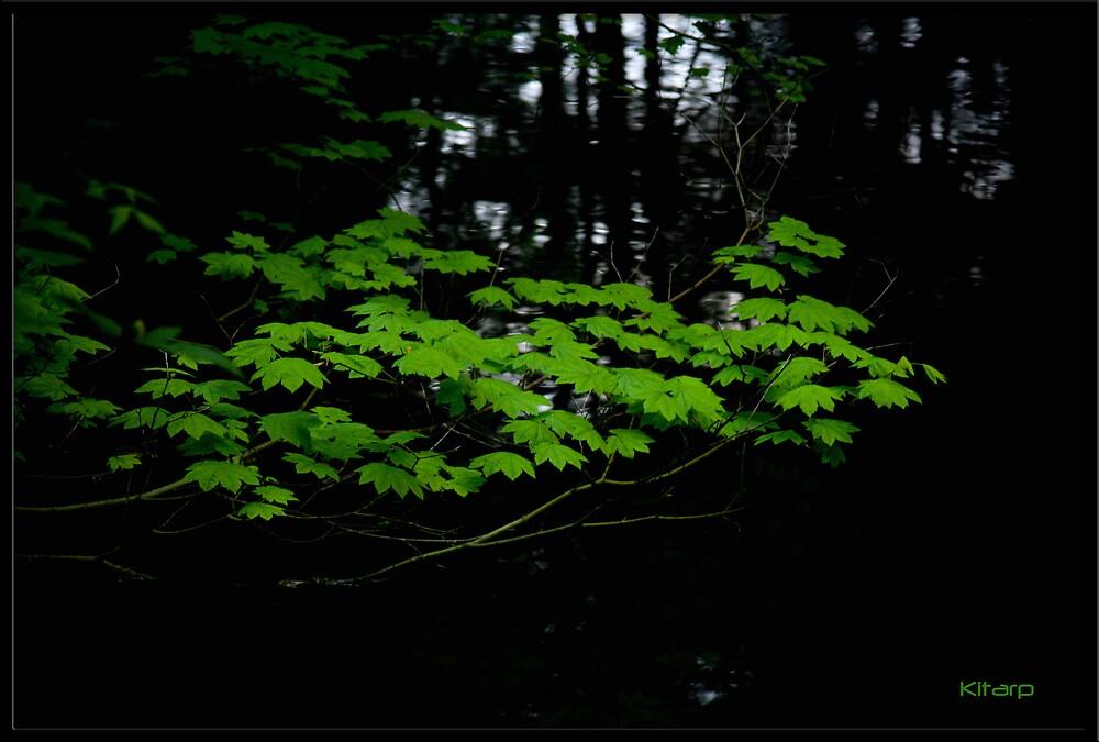 Floating leaves by Pratik Agrawal