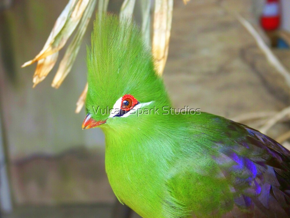 Green Crested Turaco by Vulcan Spark Studios
