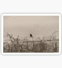 Bird On Fence in Springtime Sticker