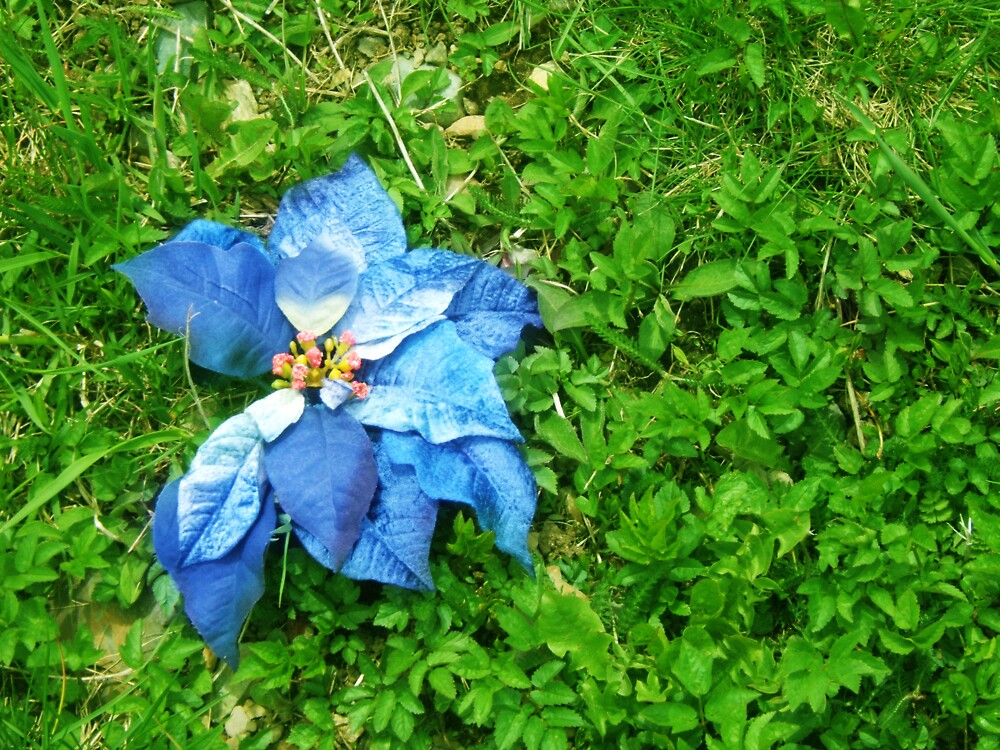 Abandoned blue flower by Stephanie  Williams