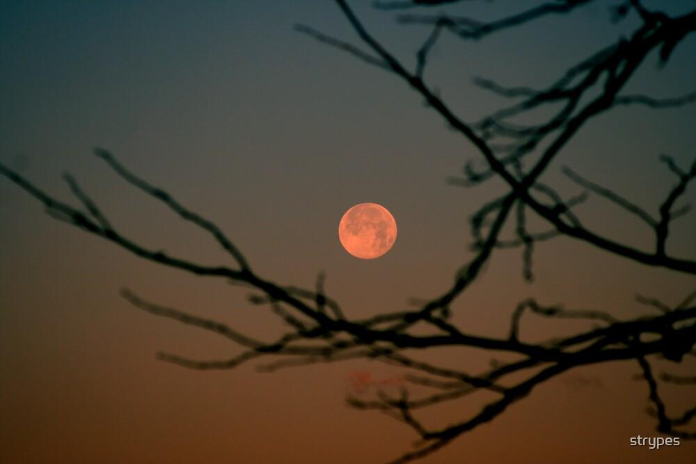orange moon thru the trees by strypes