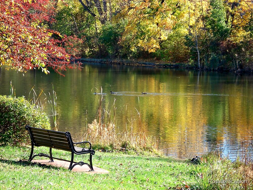 Peaceful Setting by Rosalie Scanlon