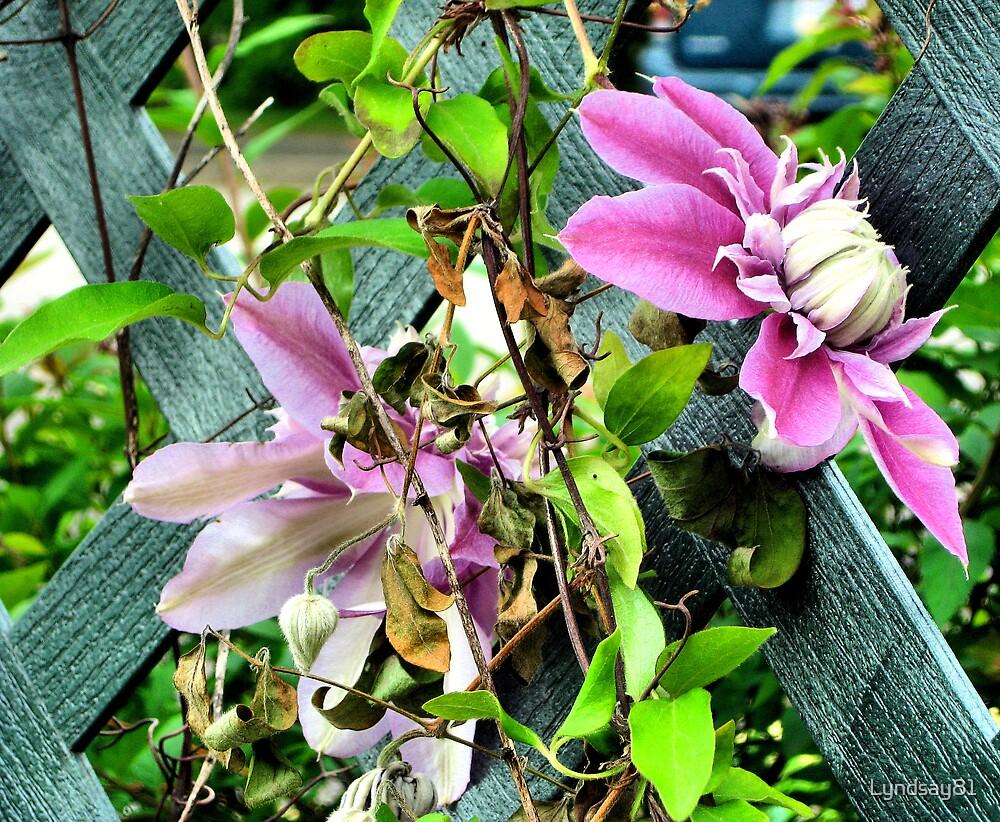 Spring Flower by Lyndsay81