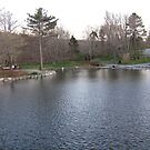 Duck pond in Bowering Park  by LeslieSweets